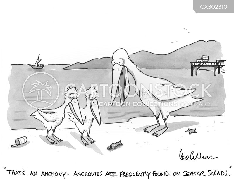 anchovy cartoon