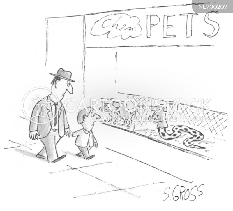 window displays cartoon