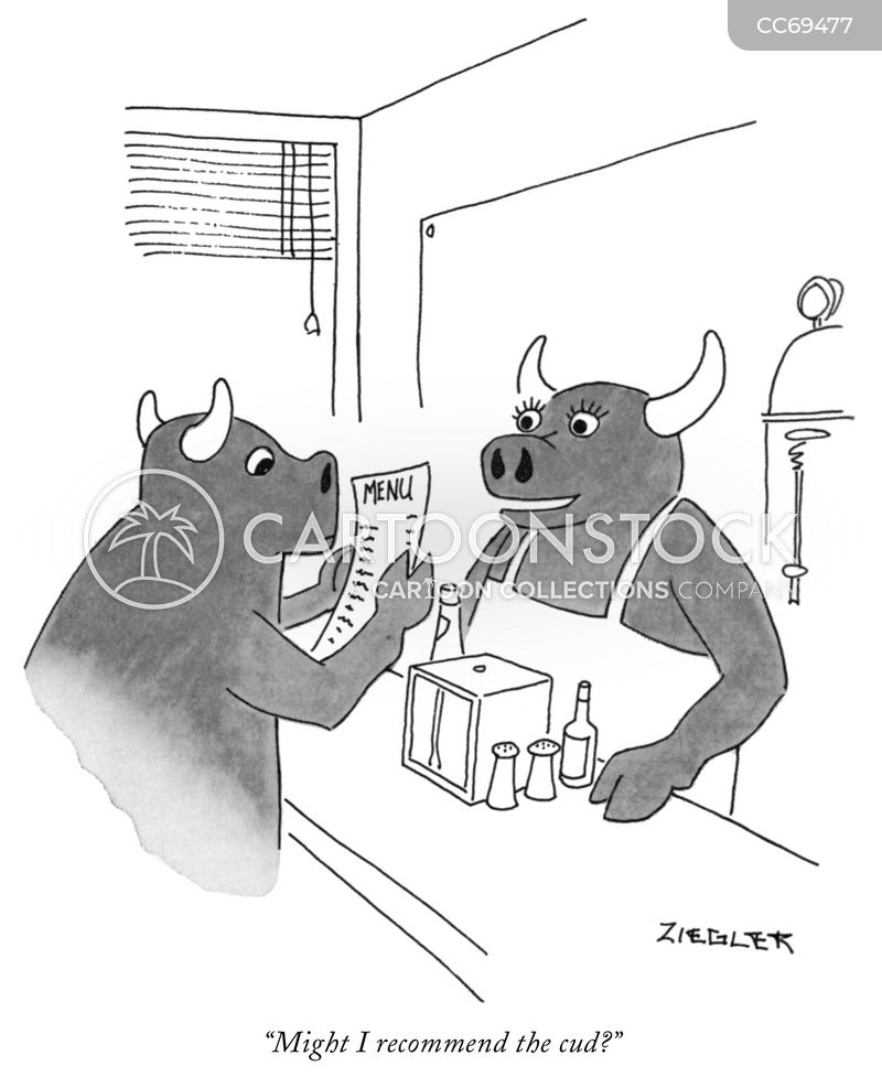 cattle cartoon