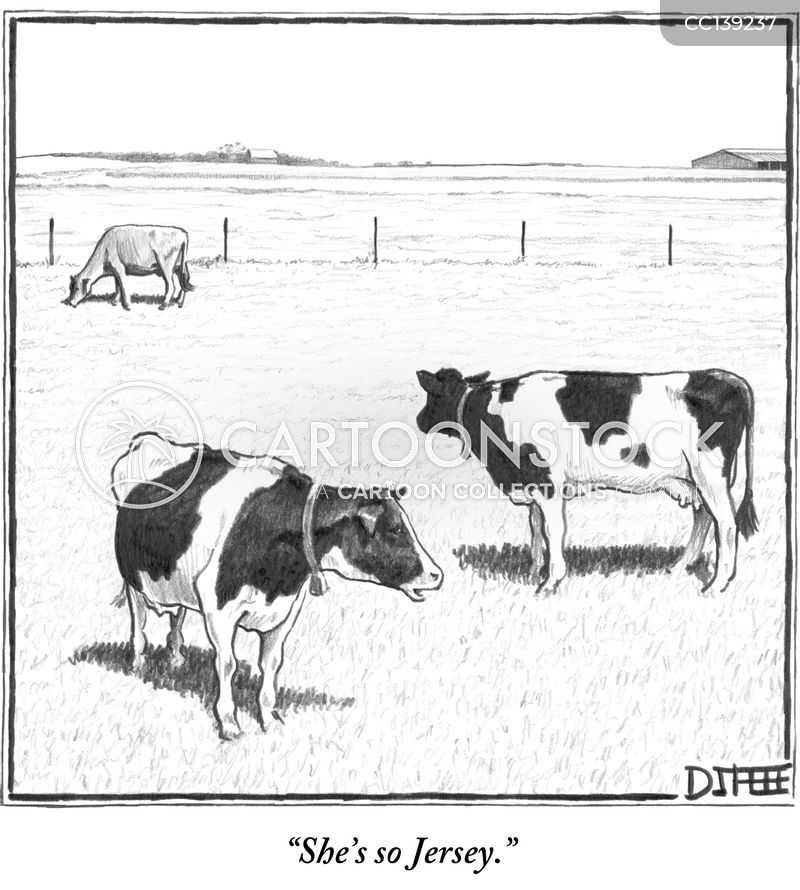 Jersey Cow cartoon