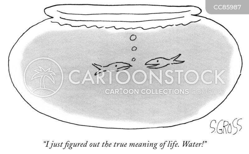 meaning of life cartoon