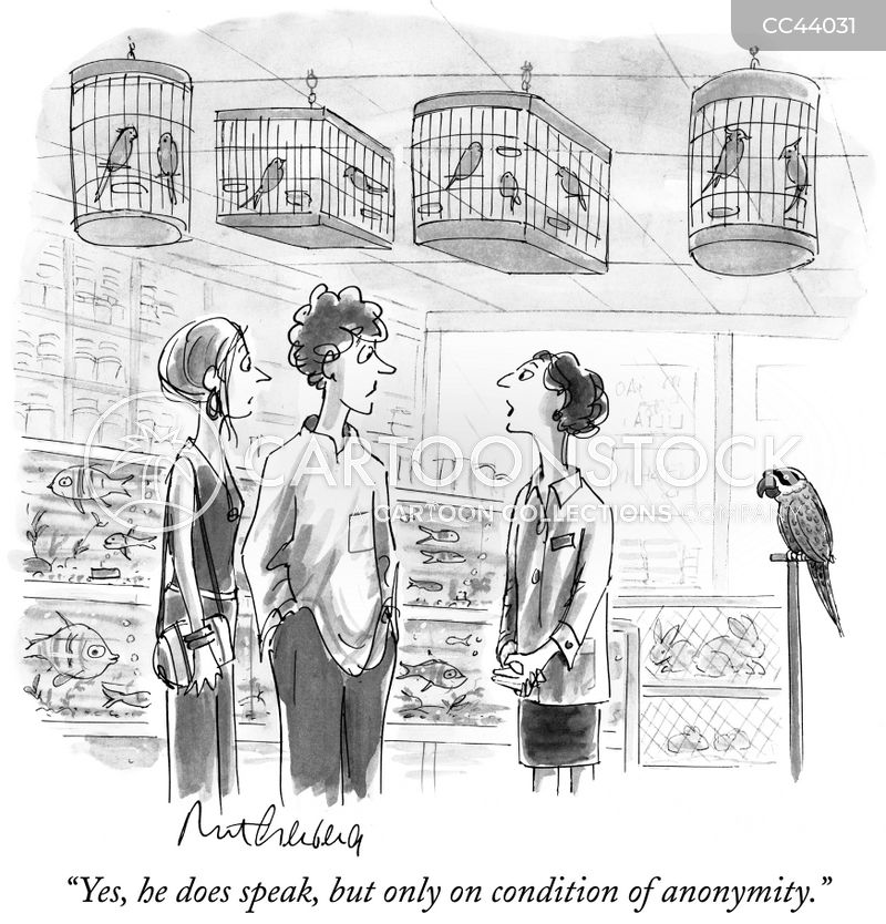 birds cartoon