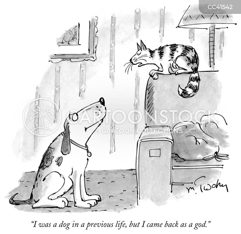 talking cats cartoon