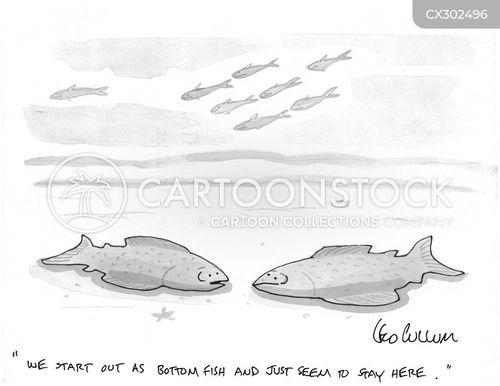 stable cartoon
