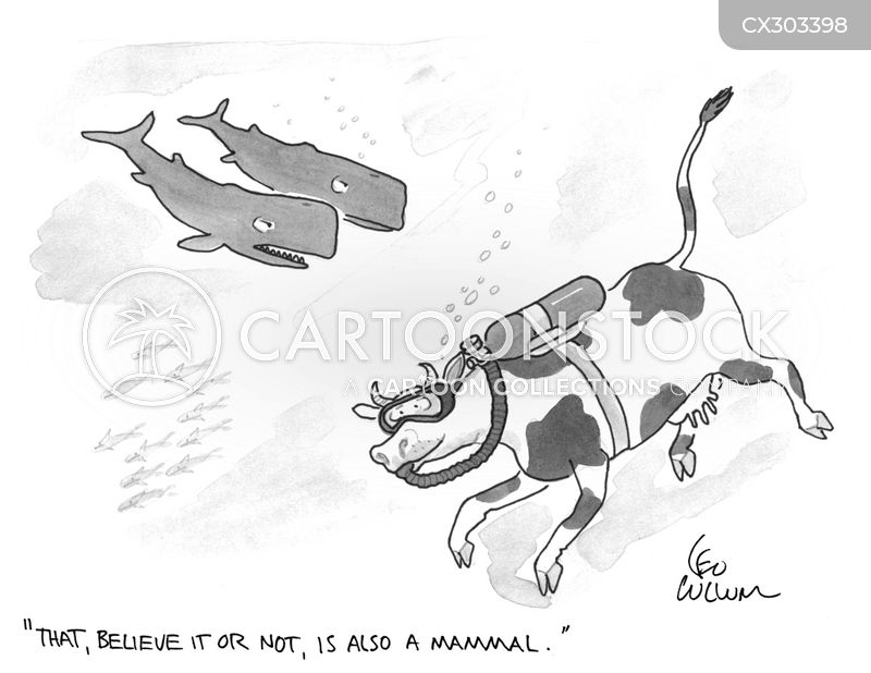 mammal cartoon