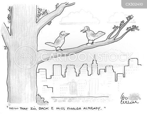 snow bird cartoon