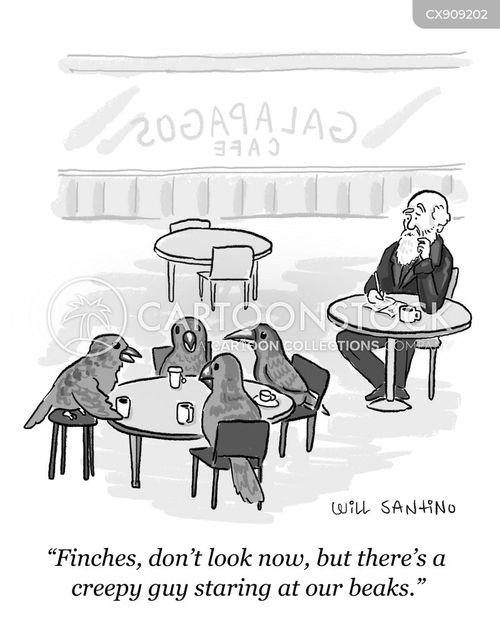 observes cartoon
