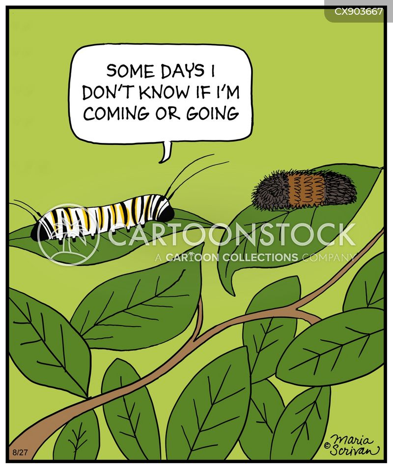 caterpillars cartoon