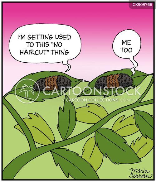 hairy cartoon
