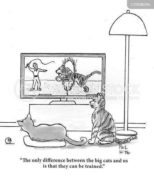 perceive cartoon