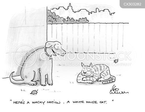 house cat cartoon