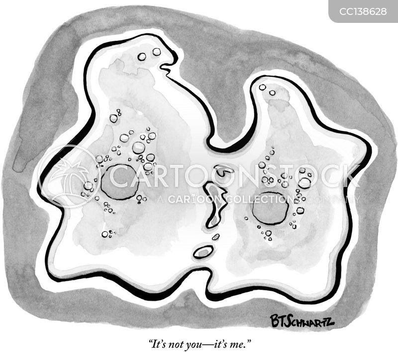 Prophase cartoon