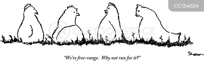 freerange chickens cartoon