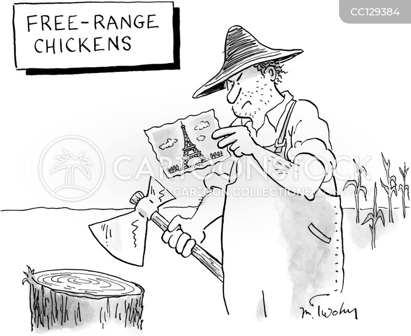 poultry cartoon