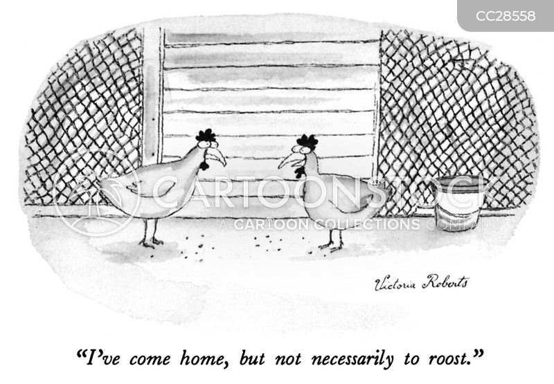roosting chickens cartoon