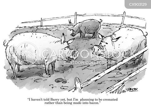cremation cartoon