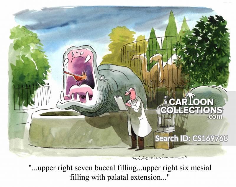 zoo vets cartoon