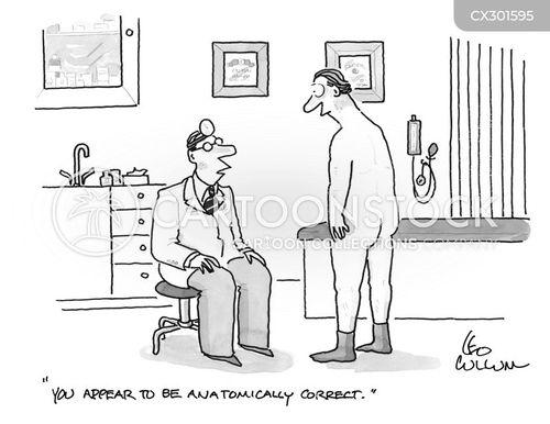 anatomically correct cartoon