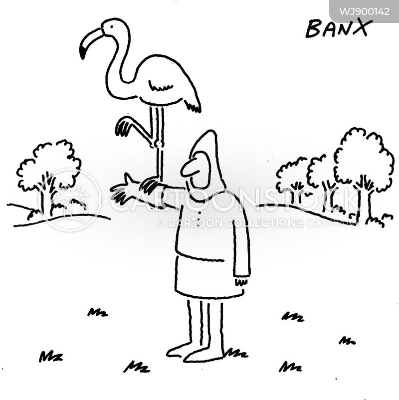 medieval falconry cartoon