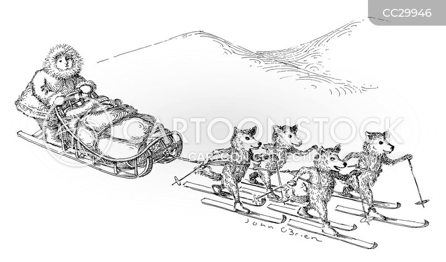 sleds cartoon