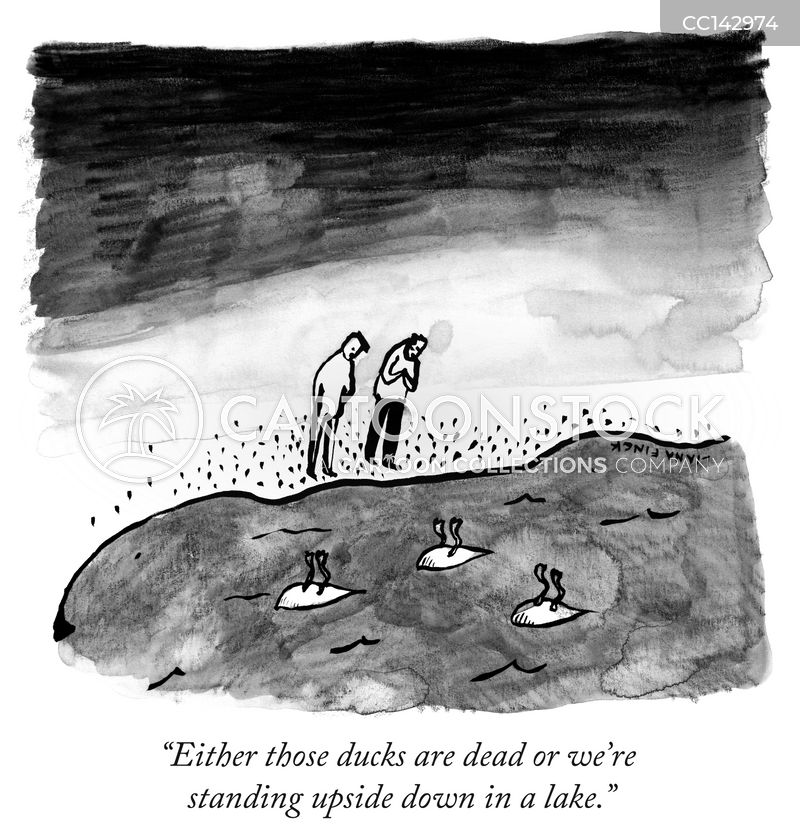 water fowl cartoon