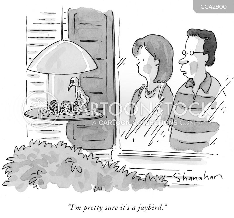 birdwatching cartoon