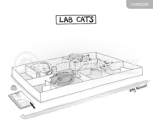lazy cat cartoon