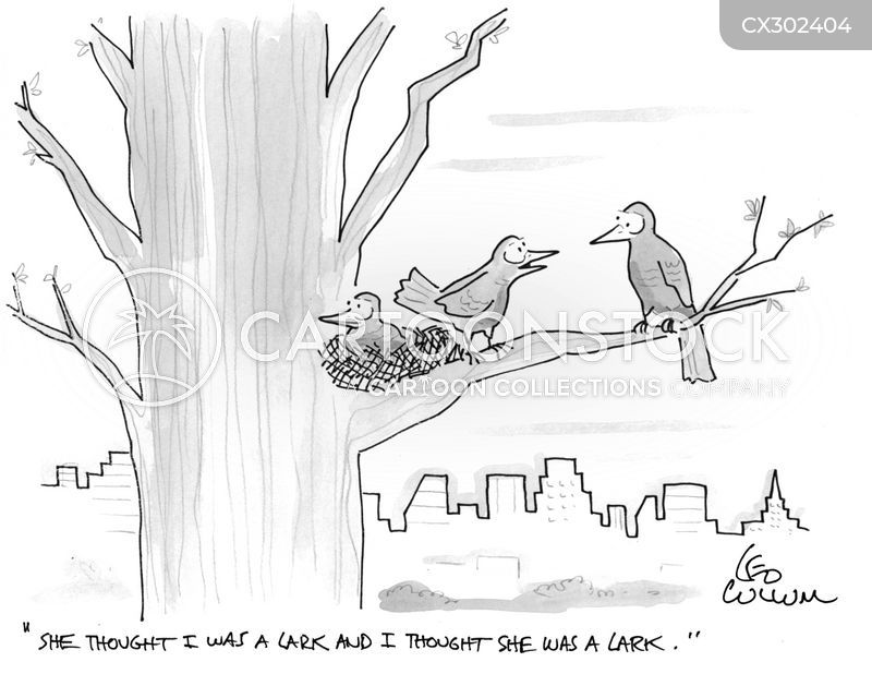 songbird cartoon