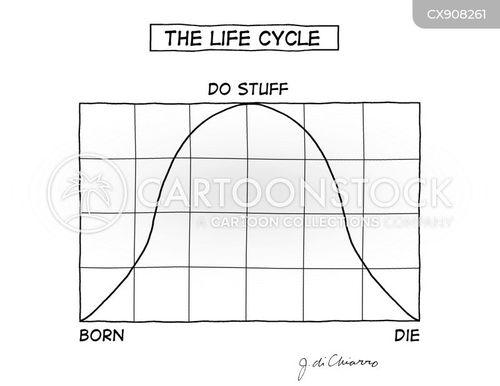 cycle of life cartoon