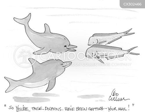 dolphins cartoon