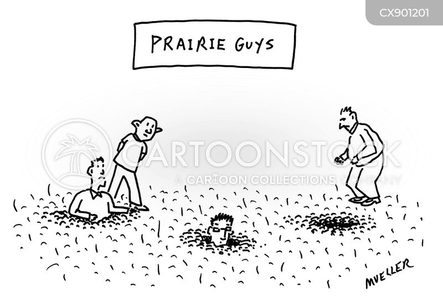 in the wild cartoon
