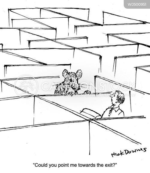rat maze cartoon