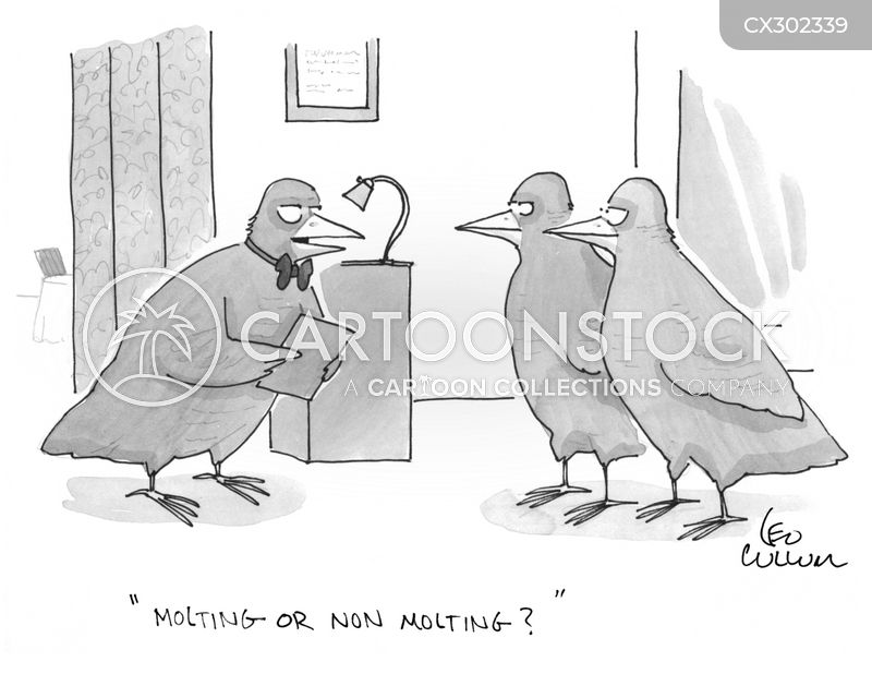 moulting cartoon