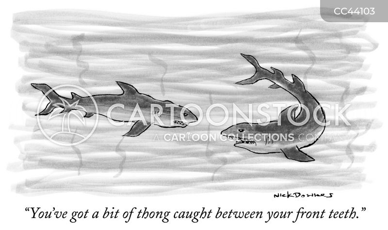 Beware Of Shark cartoons, Beware Of Shark cartoon, funny, Beware Of Shark picture, Beware Of Shark pictures, Beware Of Shark image, Beware Of Shark images, Beware Of Shark illustration, Beware Of Shark illustrations