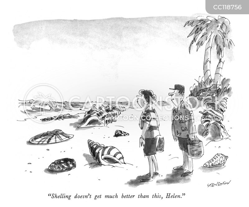 seashells cartoon
