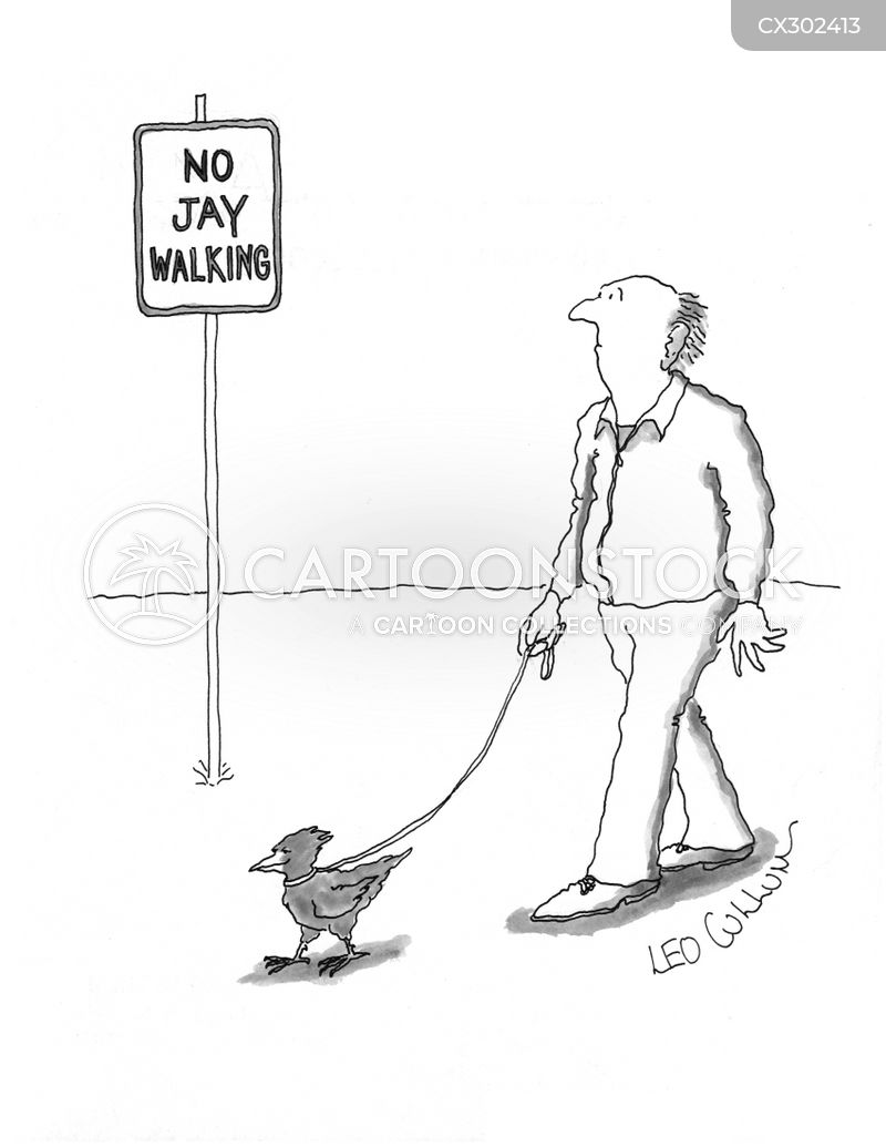 jaywalker cartoon