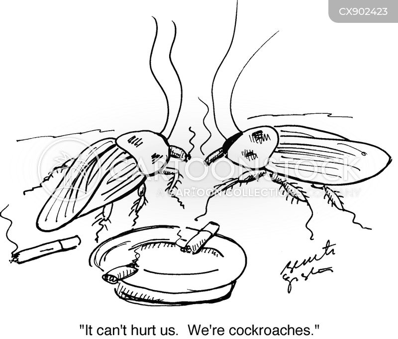 roach cartoon