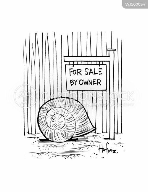 shell cartoon