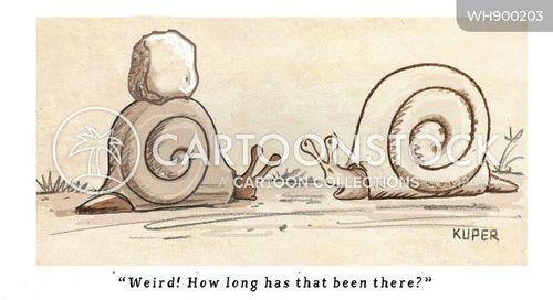 snails pace cartoon