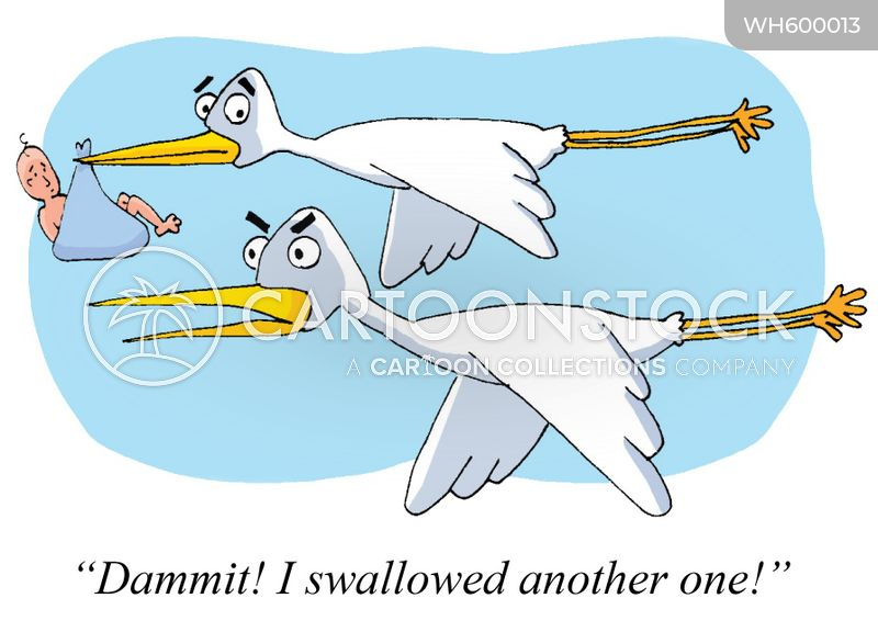 swallow cartoon