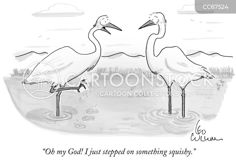 wading birds cartoon