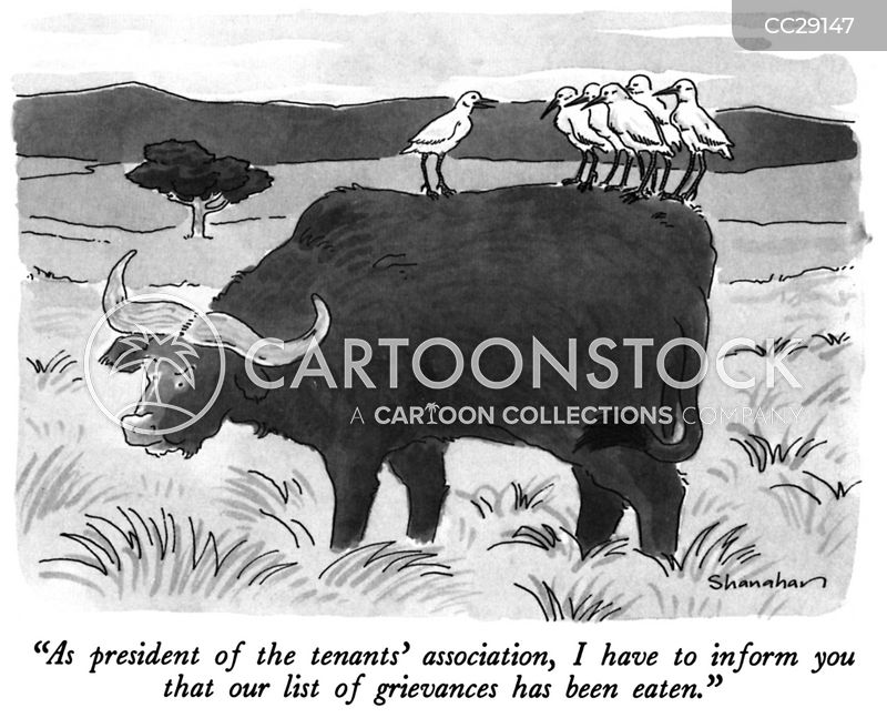 water buffalo cartoon