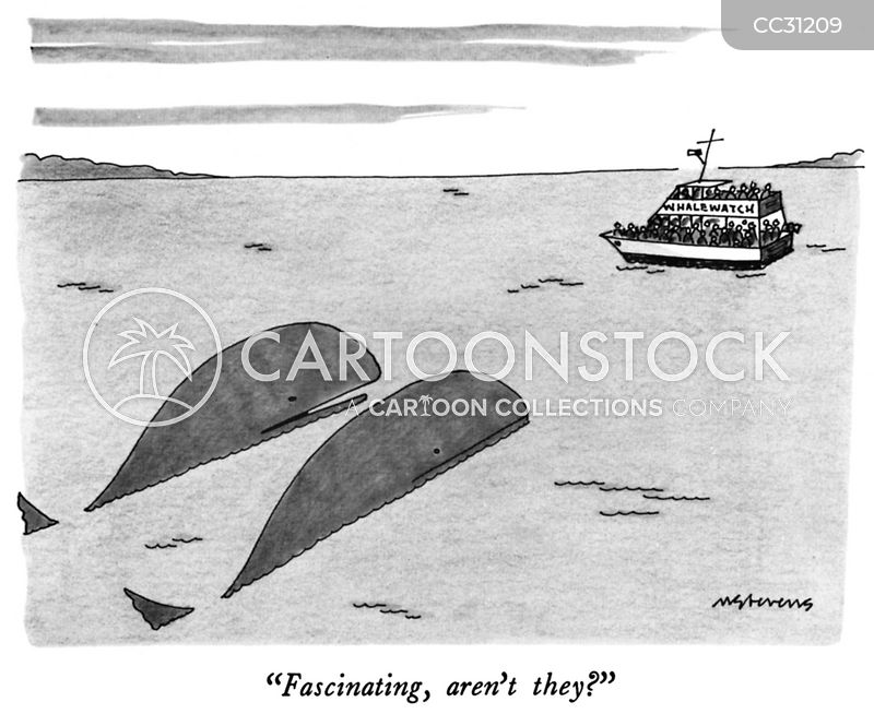 whale watching cartoon